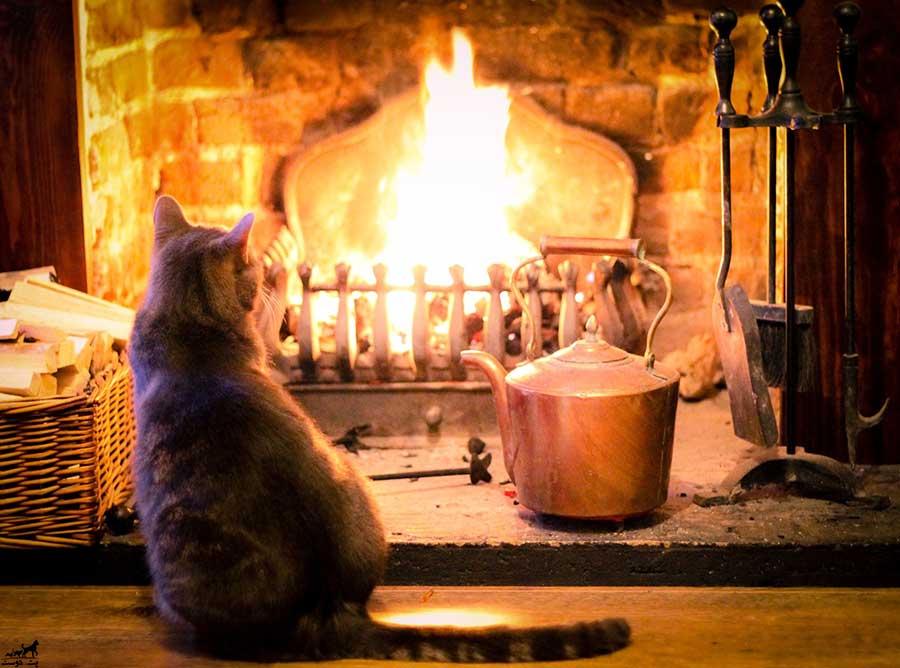 مسمومیت-گربه-با-مونوکسید-کربن