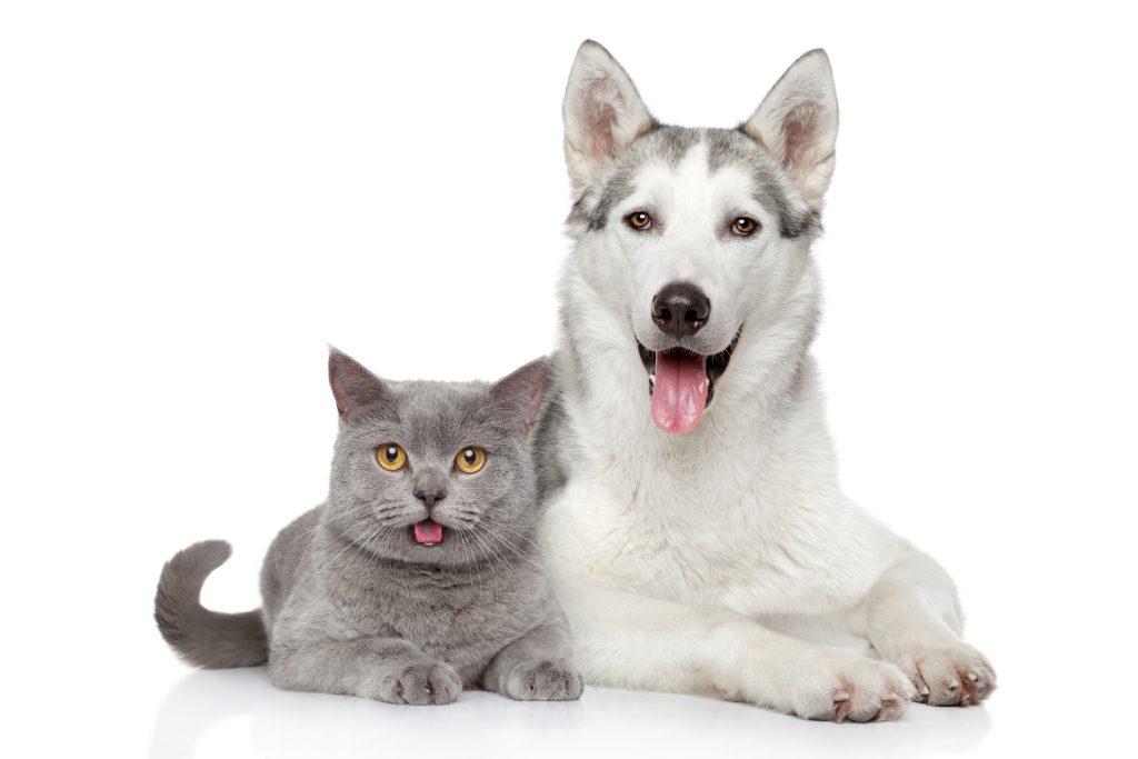 درمان شوره سگ و گربه