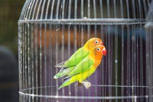 نگهداری پرنده