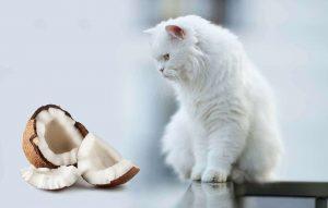 روغن نارگیل برای گربه