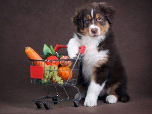 میوه های خطرناک برای سگ ها