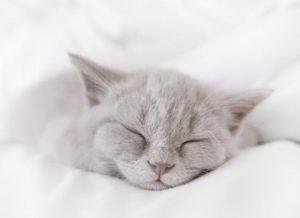 خروپف گربه ها