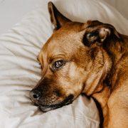 مرگ ناگهانی سگ ها