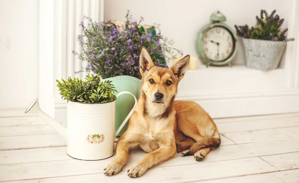 گیاهان مفید برای سگ