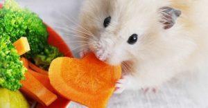 هویج برای همستر