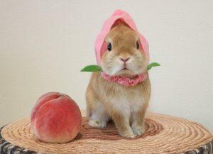 هلو برای خرگوش