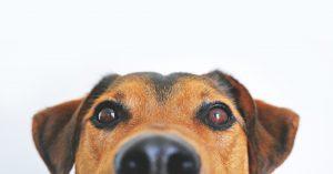 خیس بودن بینی سگ