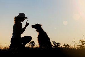 آیا همه سگ ها قابل تربیت هستند؟