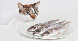 چگونه برای گربه ماهی بپزیم؟