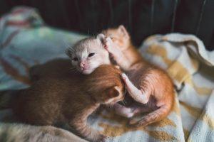 چشم بچه گربه چه زمانی باز می شود؟